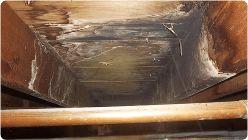 Mold On The Sheathing And Joists In A Crawl Space