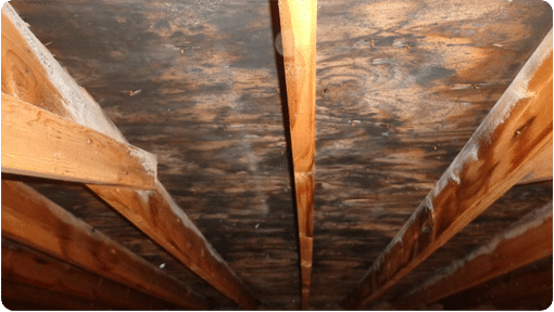 Attic With Mold On The Sheathing And Joists