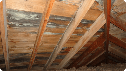 Mold On The Sheathing And Joists In An Attic