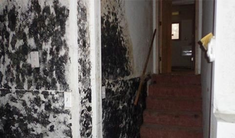 Mold Remediation Professionals