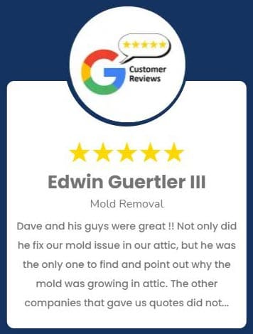 Edwin Guertler III Mold Removal Review